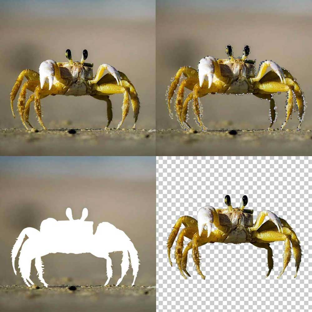 Multiple crab figure separated to clipping path